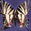 Salman Rushdie at The Moth